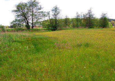 Landschaftspflegeverband Landkreis Augsburg e.V. Vielfalt Schmutterwiesen