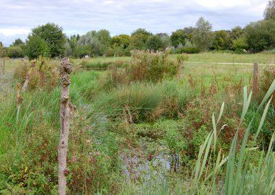 Landschaftspflegeverband Landkreis Augsburg e.V. Biotop am Brunnenwasser