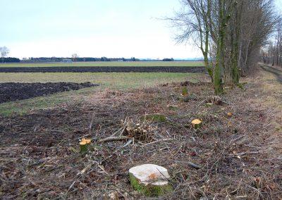 Landschaftspflegeverband Landkreis Augsburg e.V. Feldhecke auf Stock gesetzt