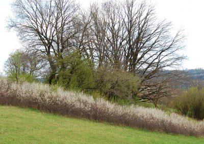 Landschaftspflegeverband Landkreis Augsburg e.V. Feldgehölze
