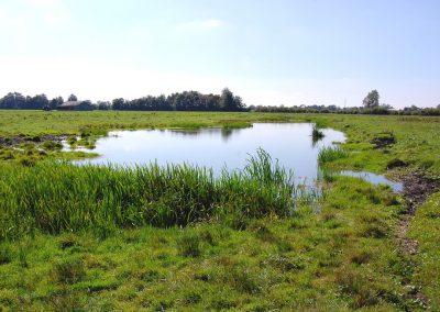 Landschaftspflegeverband Landkreis Augsburg e.V. Flachwasser-Biotope