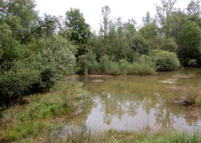 Landschaftspflegeverband Landkreis Augsburg e.V. Flachwasser