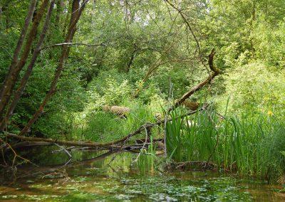 Landschaftspflegeverband Landkreis Augsburg e.V. Herbrechtsgraben
