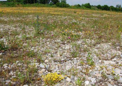 Landschaftspflegeverband Landkreis Augsburg e.V. Mähgutübertragung