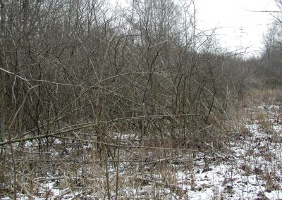 Landschaftspflegeverband Landkreis Augsburg e.V. Verbuschtes Biotop
