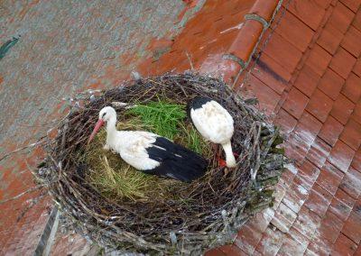 Landschaftspflegeverband Landkreis Augsburg e.V. Storchenpaar im Nest