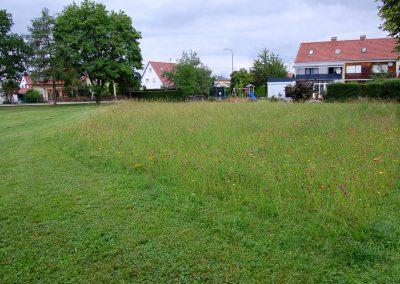 Landschaftspflegeverband Landkreis Augsburg e.V. Blühfläche Untermeitingen
