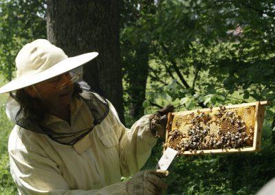 LPV-Veranstaltung Wunderwelt der Bienen, Mai 2019